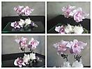 Mundo de Orquídeas