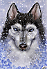 Husky under snow