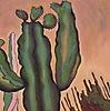 Cactus Amigable
